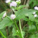 Traitement naturel et efficace contre le CORONA VIRUS (Covid-19)